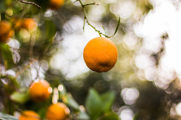 Oranges Photo by Anj Belcina on Unsplash